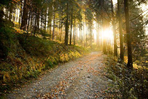 woodworking-green-environment